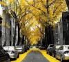 خیابانهای جادویی/تصاویر